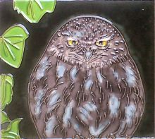 Little Owl 8x8