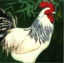Cockerel 8x8
