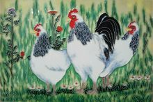 Light Sussex Chickens 8x12