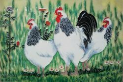 Light Sussex Chickens 8x12