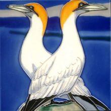 Gannet 8x8