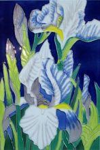 Iris 8x12